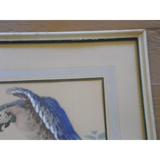 Framed Parrot Picture - Image 4 of 6