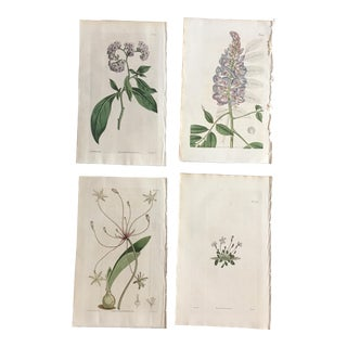 Set of 19th Century Hand-Colored Botanical Prints