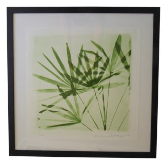 "Madeline and Robert Longstreet Botanical ""Lady Palm"" Photographic Print For Sale"