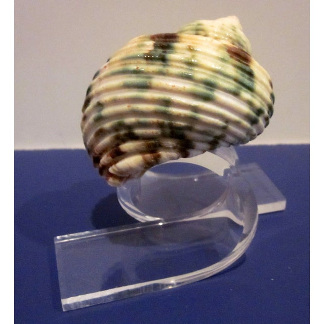 Lucite Napkin Rings Sea Shells Dorothy Thorpe - Image 4 of 6