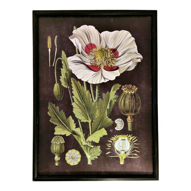 Framed White Flower Botanical Print - Image 1 of 4