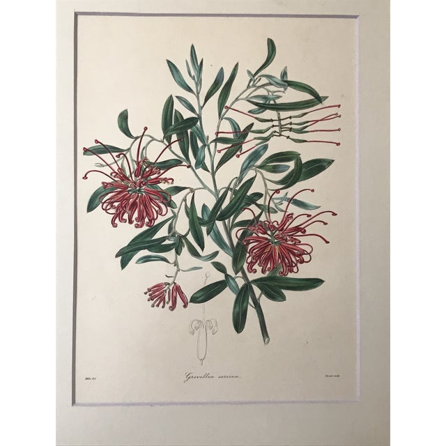 Illustration Antique Floral Botanical Colored Etching 19th Century For Sale - Image 3 of 7