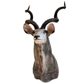 Vintage Greater Kudu Taxidermy Mount For Sale