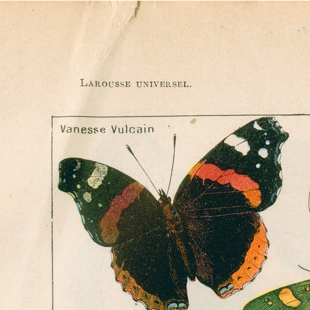 Country Vintage Butterflies Archival Print For Sale - Image 3 of 4