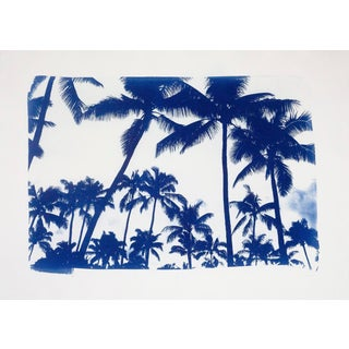 Summer Palm Tree Landscape, Limited Edition Cyanotype Print For Sale