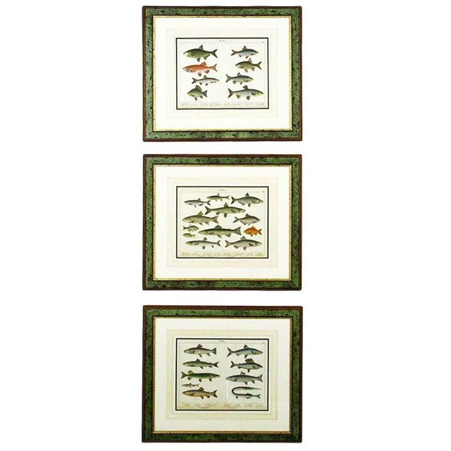 Colorful Trio 1880 Schubert German Lithographs of Aquatic Life For Sale - Image 10 of 10