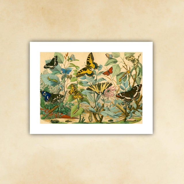 French Antique 'Butterfly Garden' Archival Print For Sale - Image 3 of 4