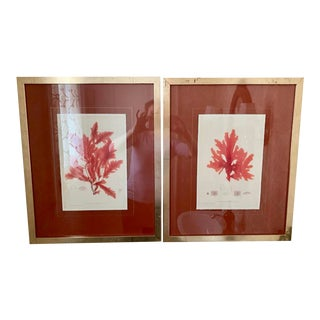 Framed Red Coral Botanical Prints - a Pair For Sale