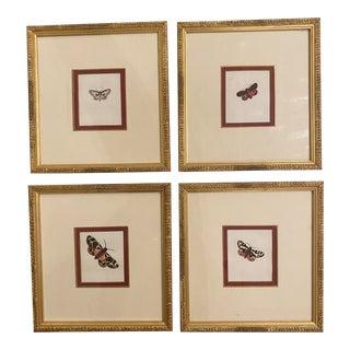 Framed Antique Butterfly Prints - Set of 4 For Sale
