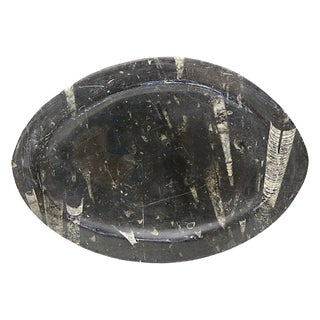 Antique Natural Stone Ammonite Fossils Platter For Sale