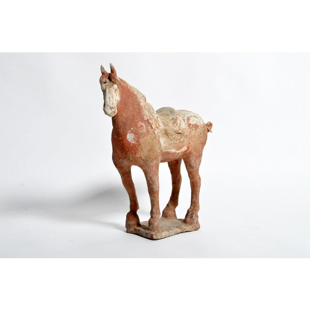 Tang Dynasty (618-906 A.D.). Horses were powerful symbols of wealth and social position and were often buried in effigy....