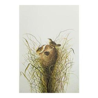 1966 Cottage Print of Short-Billed Marsh Wren by John James Audubon For Sale