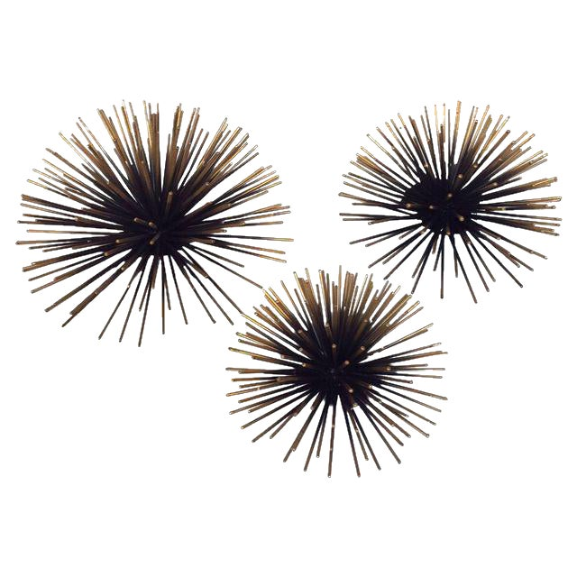 Gold Tipped Sea Urchin Wall Decor - Set of 3 For Sale