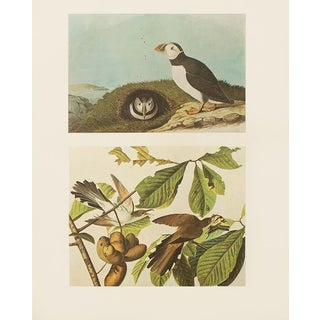 1966 Puffin & Yellow-Billed Cuckoo by John James Audubon For Sale