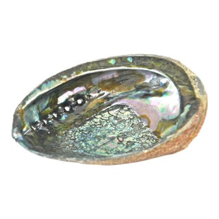 Vintage Mother of Pearl Bowl-Shaped Abalone Shell
