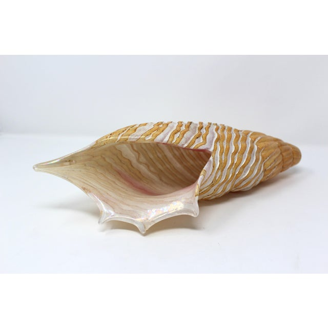 Contemporary Vintage Murano Glass Sea Shell For Sale - Image 3 of 3