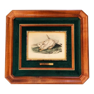 "Mid 19th Century Antique John James Audubon First American Octavo Edition ""Northern Hare"" Print For Sale"