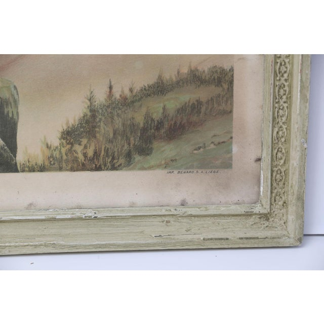 1950s Belgian Colored Framed Pigeon Engraving For Sale - Image 5 of 7