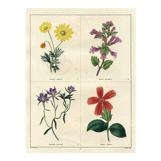 1826 English Botanical Engraving, Including Anemone For Sale