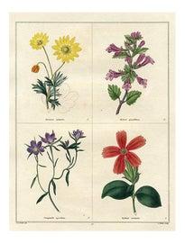 Image of Orange Reproduction Prints