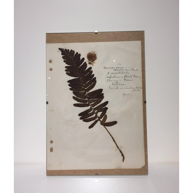 Vintage Christmas Fern Botanical Journal Page - Image 2 of 5