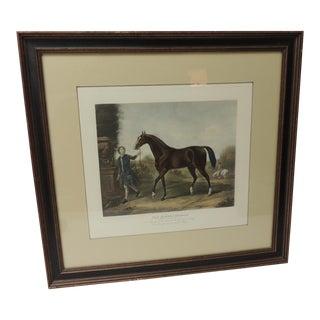 "Framed Plate of the Arabian Horse ""The Darley Arabian"" For Sale"