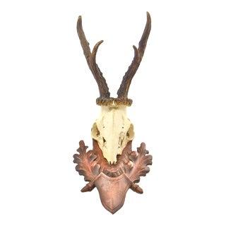 German Mounted Roe Buck Antlers