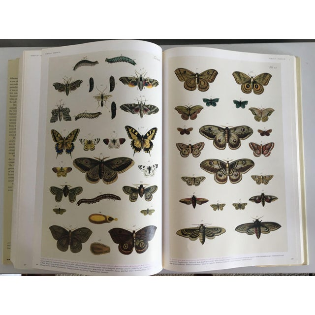 Moving Sale - Cabinet of Curiosities Book by Albertus Seba - Image 8 of 11