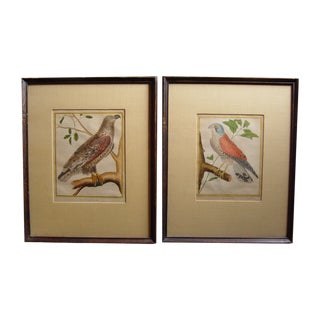 1786 French Bird Engravings - a Pair For Sale