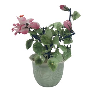 Jade Bonsai Flowering Potted Plant For Sale