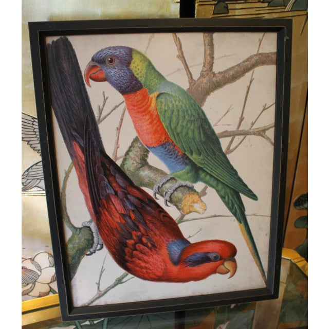 Framed Bird Wall Art Prints Pictures - Set of 4 For Sale - Image 4 of 9