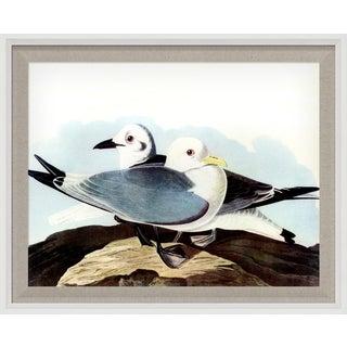 Audubon 10, Framed Artwork For Sale