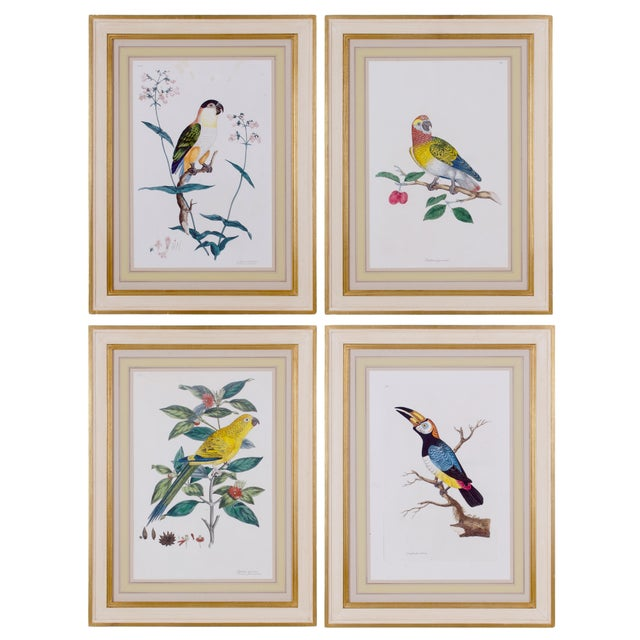 1796 English Traditional John Frederick Miller Parrot Engravings - Set of 4 For Sale - Image 12 of 12