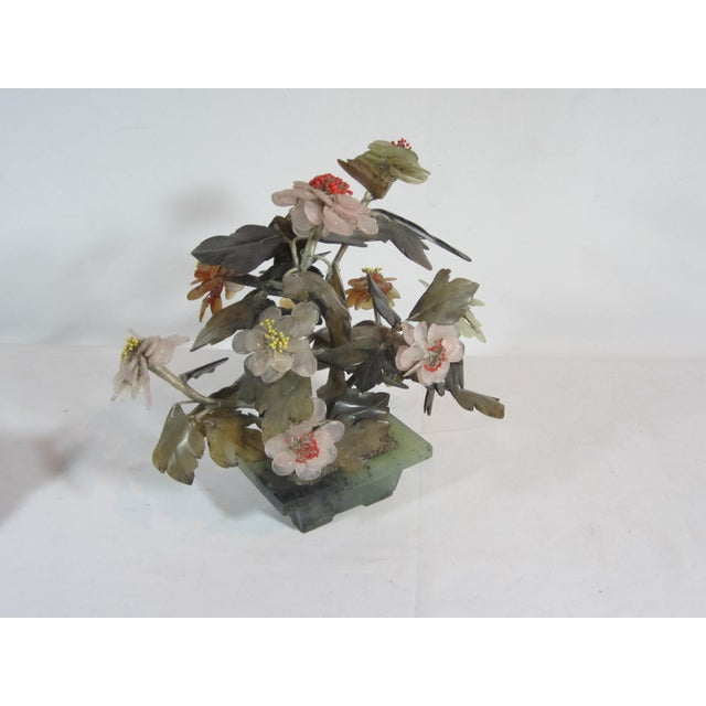 Asian Jade Tree in Planter - Image 5 of 5