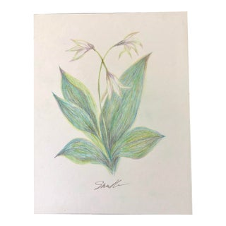 Original Colored Pencil Botanical Drawing For Sale