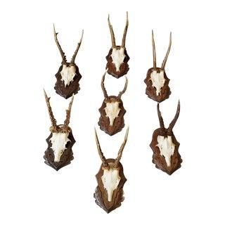 Set of Twenty Two Roe Deer Antler Trophies with Foliate Carved Backs