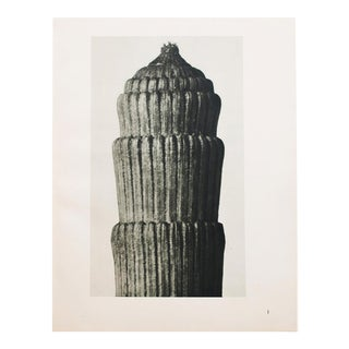 1935 Karl Blossfeldt Two-Sided Photogravure N1-2 For Sale