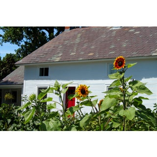 """""""Sunflowers and Red Door"""" Photograph"""