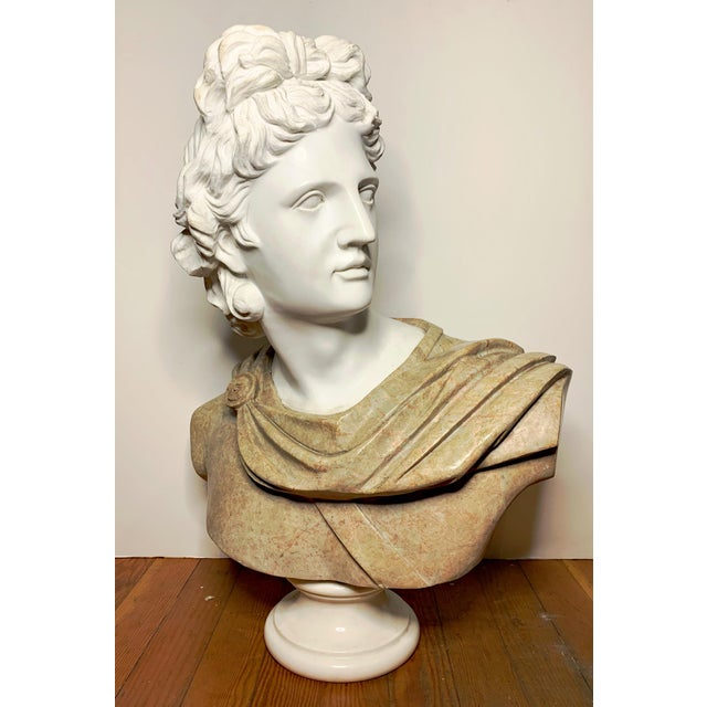 Italian Marble Bust of Appollo Belvedere For Sale - Image 12 of 12