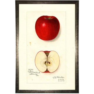 Red Apple Study in Pewter Shadowbox 17x25 For Sale