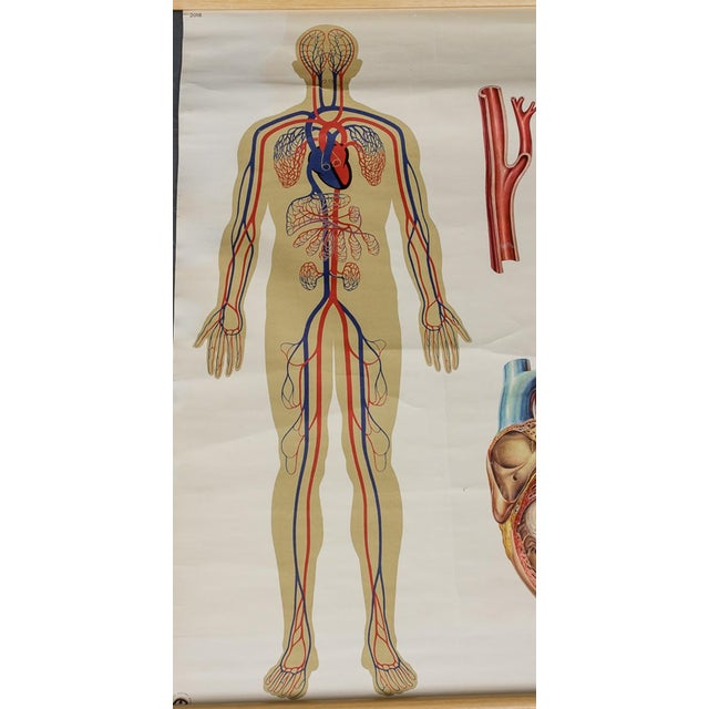 Industrial Vintage Circulatory and Respiratory Learning Poster - A Pair For Sale - Image 3 of 7