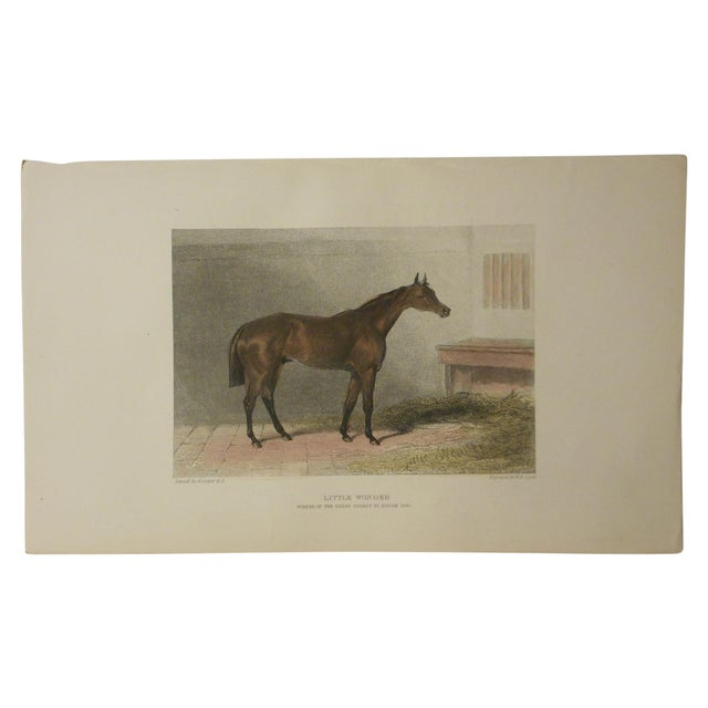 Antique Horse/Equine Engraving - Image 2 of 2