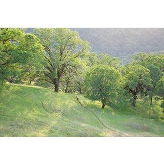 "Gaétan Caron ""Wild Pony on Mixed Oak Forest Ridge"" Mendocino, Ca 2011 For Sale"