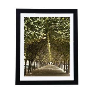 Framed Original Photograph: Paris Park For Sale
