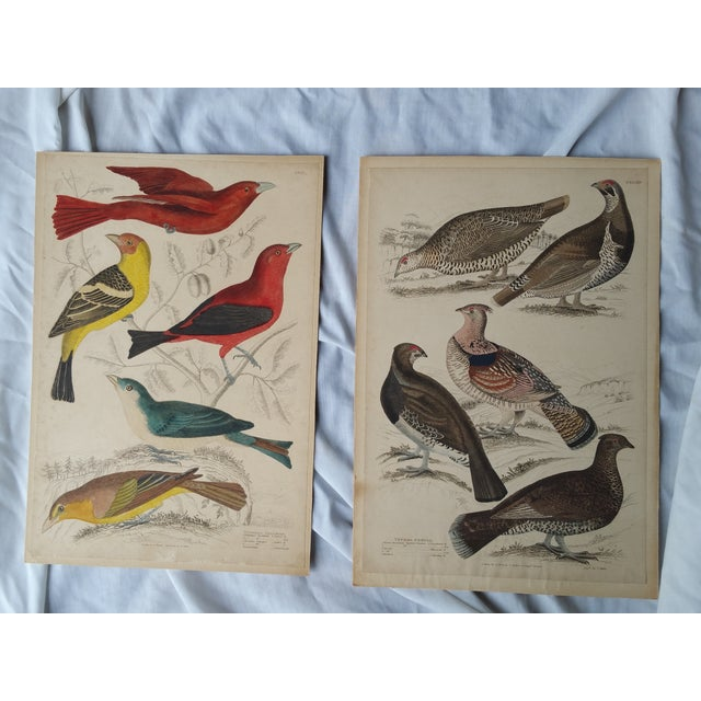 Pair of etchings depicting trogons and grouse. Printed in France circa 1850. Hand colored. Mounted on acid free mats.