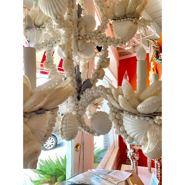 Christa's South Seashells Large 8-Light Shell Chandelier For Sale - Image 4 of 9