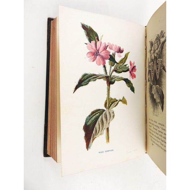 Familiar Wild Flowers 1902 - 2 Volumes For Sale - Image 9 of 11