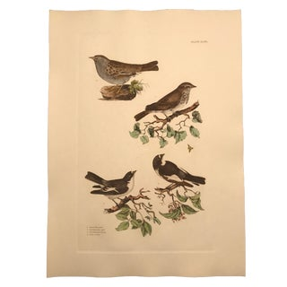 Traditional Fly Catchers - Hand Colored Copper Engraving by P. John Selby For Sale