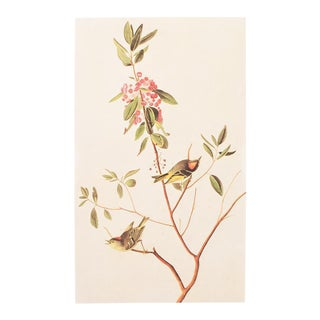 1966 Vintage Cottage Lithograph of Ruby-Crowned Kinglet by John James Audubon For Sale