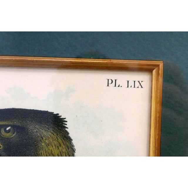Realism Hand Colored Eagle Etching Lithograph For Sale - Image 3 of 4